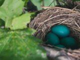 Décorer sa maison pour les fêtes de Pâques